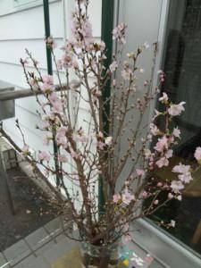 15.2.3.桜2