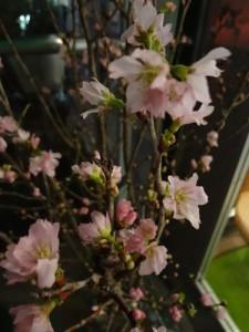 15.2.3.桜3